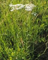 wilde-bertram-plant