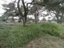 kraaiheide onder grove den