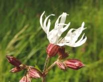 witte bloem 4