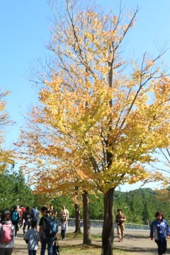 Pemandangan sepanjang jalan menuju sirkuit yang dipenuhi daun-daun yang sudah menguning.