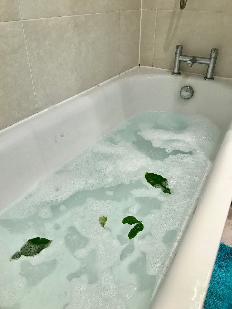 Pomelo Leaves floating in the bathtub