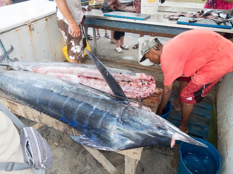 Anse Mitan: unser erster Blue Marlin