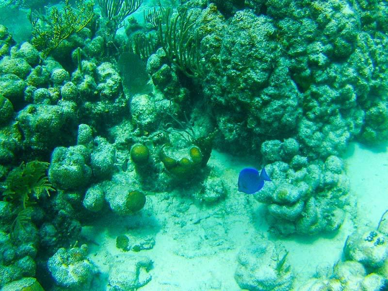 Culebrita Schnorcheln: Suchbild! Wo ist der Fisch
