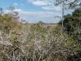 Everglades: Blick auf die Shark Bay