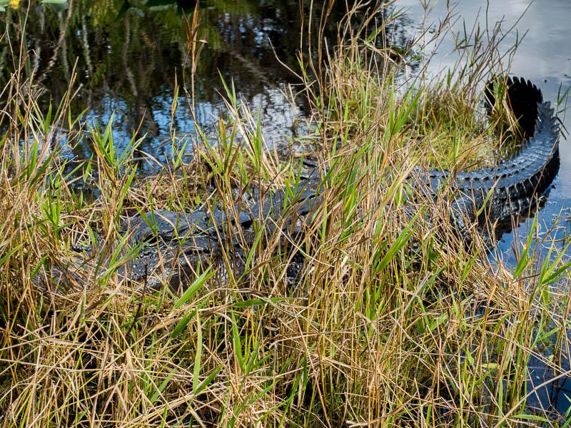 Everglades_2-26.jpg