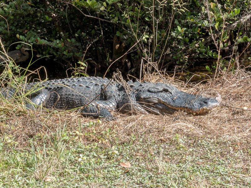 Everglades_2-30.jpg