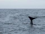 Walsafarie auf Andenes