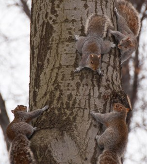 Four squirrels!