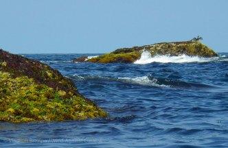 Outlying rocks