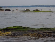 Skerries, with Execution Rocks Light behind