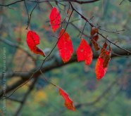 Mohonk Fall colors 17