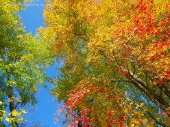 Spectacular Fall