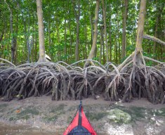 The banks are mangroves and mud