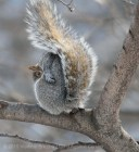 Squirrels 3