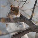 Squirrels 2