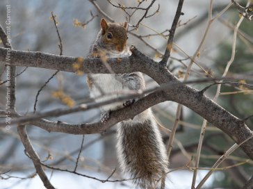 Squirrels 1
