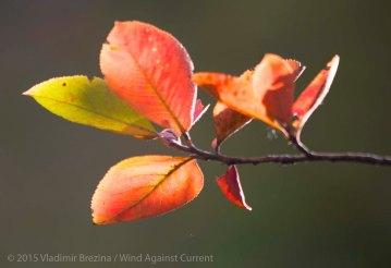 Fall Colors 2015 3