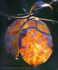 Fall Colors 2015 1