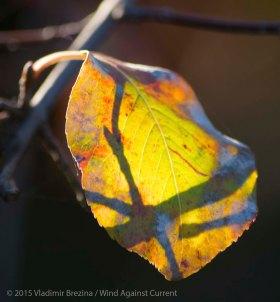 Fall Colors 2015 7