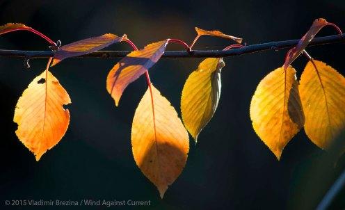 Fall Colors 2015 21