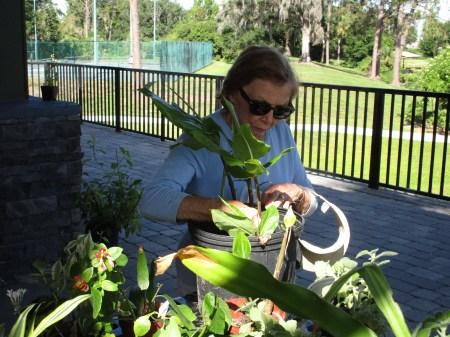 Plant Exchange Photo #1