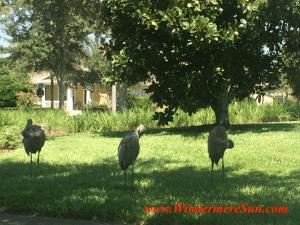Windermere Crane Family1 (Windermere Sun-Susan Sun Nunamaker)