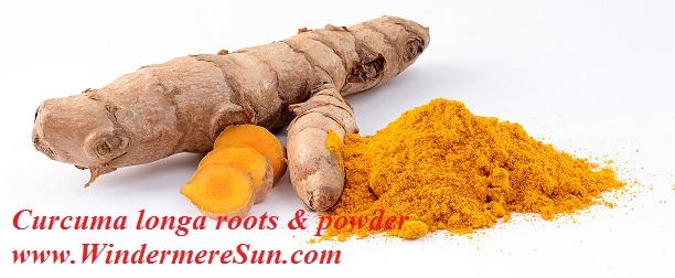 Turmeric/Curcuma longa roots & powder-great anti-inflammatory agent