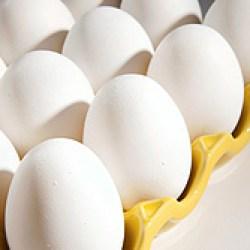 Pasteurized Eggs (USDA)