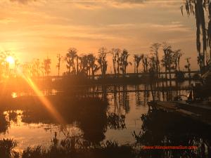 Florida sunshine (credit: Windermere Sun-Susan Sun Nunamaker)