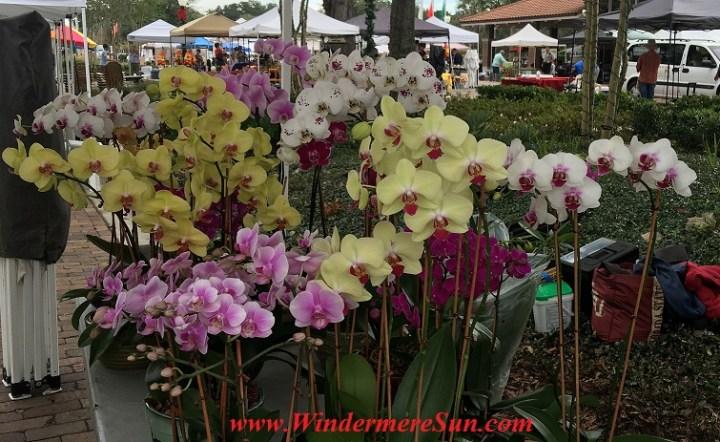 WinterGardenFarmer'sMarket-Orchids3 final