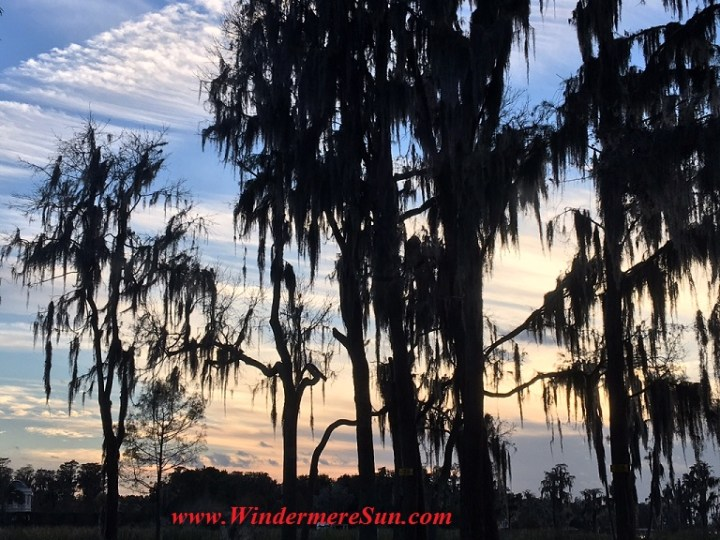 FL Cypress tree and Spanish moss at sunset final