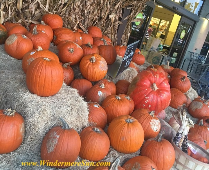 Autumn Pumpkin (credit: Windermere Sun-Susan Sun Nunamaker)