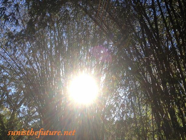 Sunshine Through Bamboos (credit: Susan Sun Nunamaker)