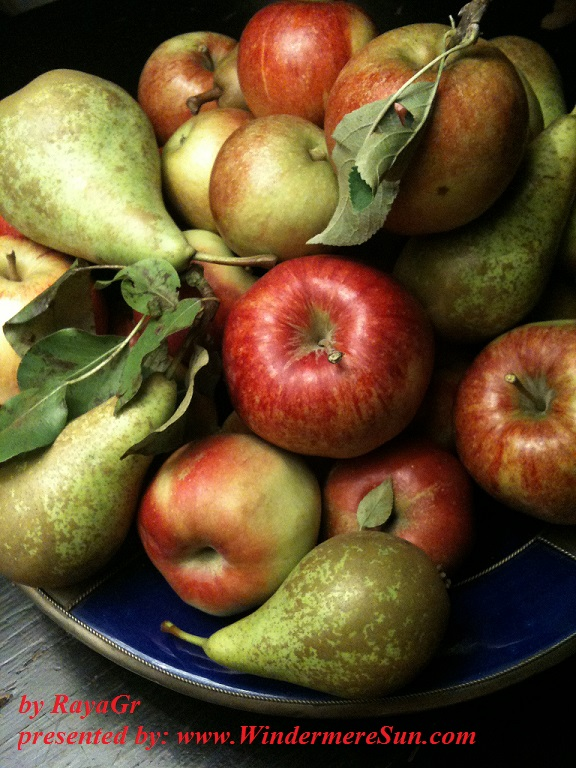 apple-and-pear-harvest-1318243-freeimages-by-rayagr-final