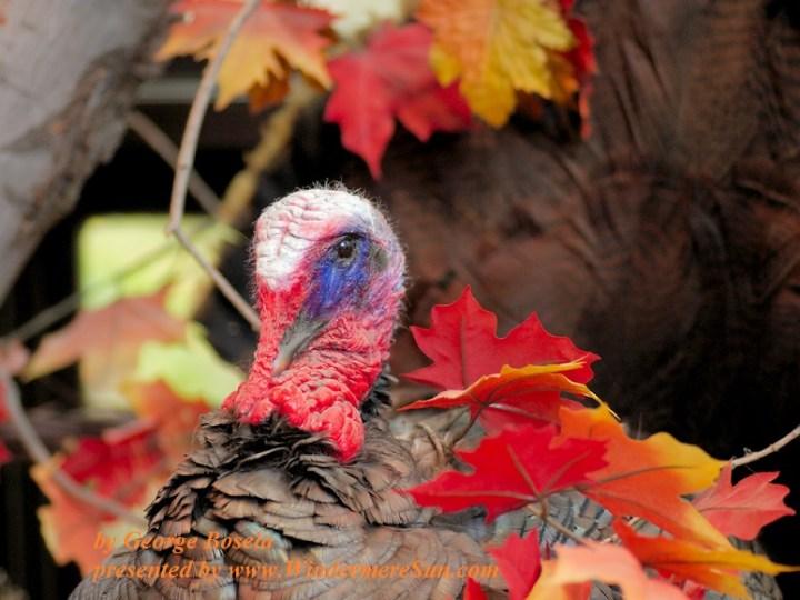 Autumn Wildlife (credit: George Bosela)