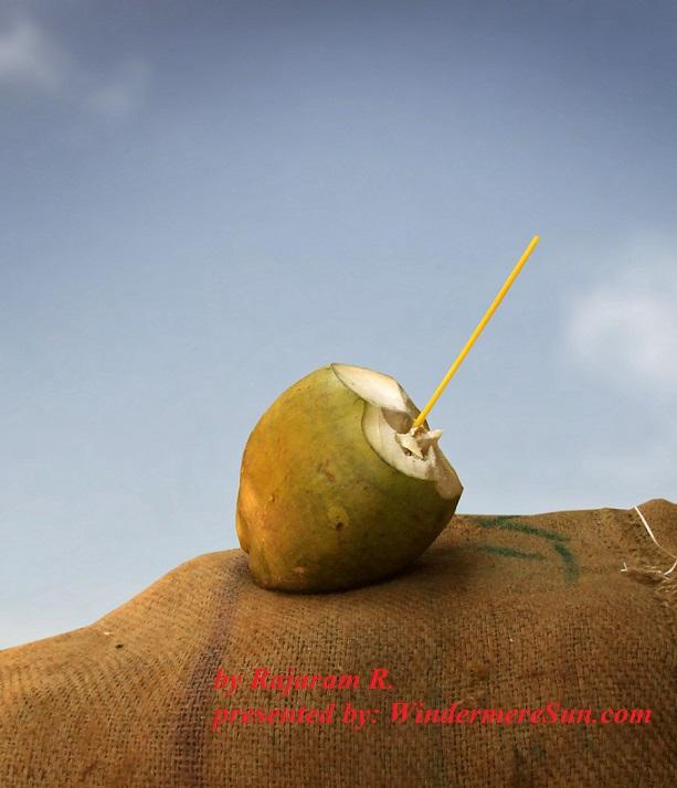 Coconu by Rajaram R.