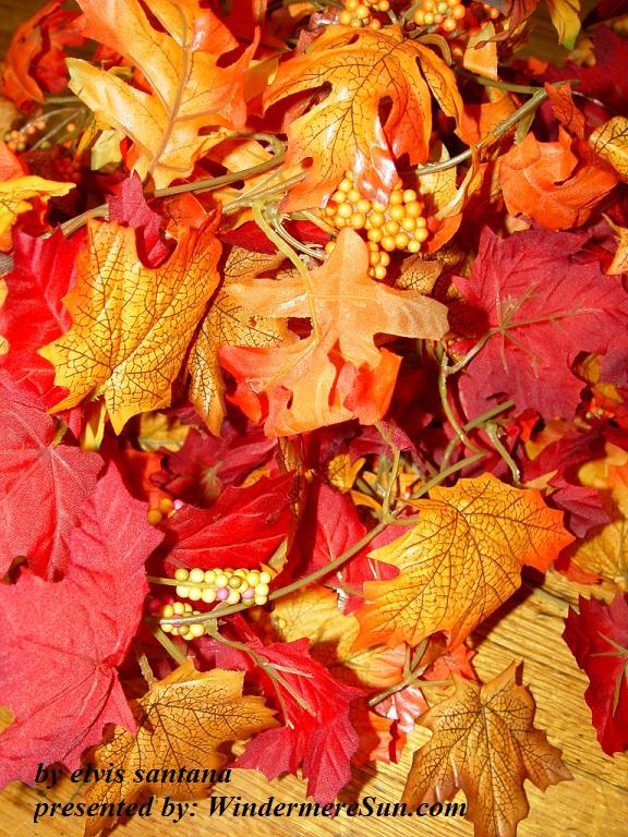 fall-2-1185666-freeimages-by-elvis-santana-final