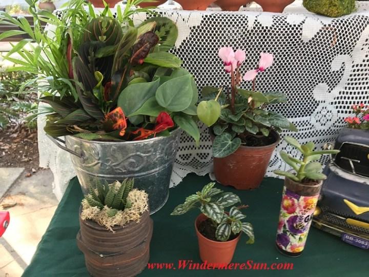 pots of flowers final