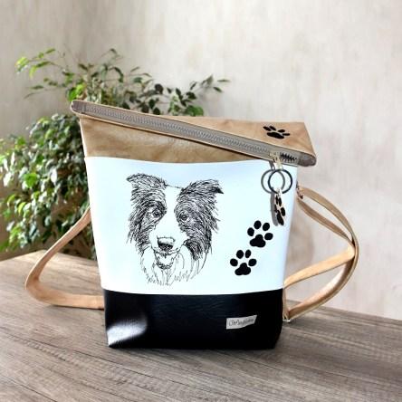 Border Collie hellbraun-weiß-schwarz