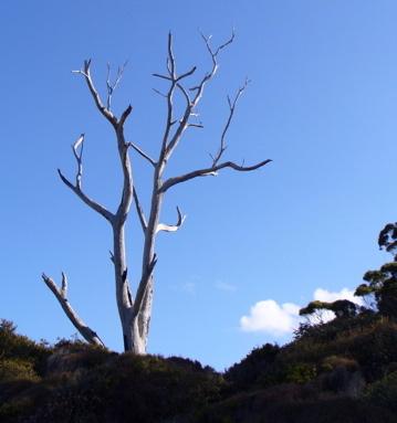 Rilke_tree