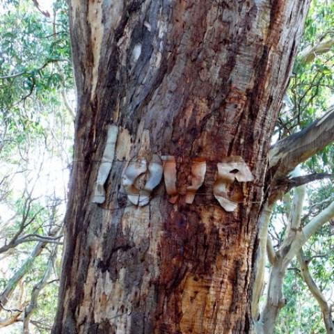 tree_love_3