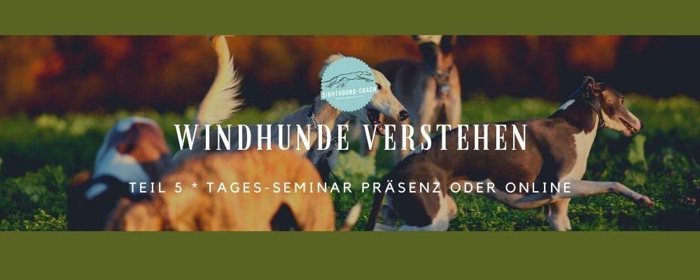 Windhunde verstehen Teil 5 die Praxis zur Theorie