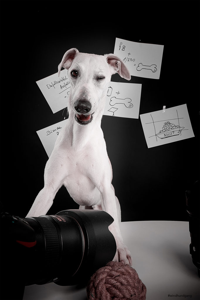 Workshop Hundefotografie im Studio