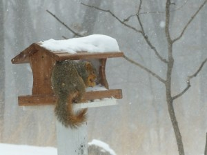 Stormy Squirrel