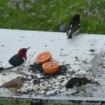 Three species sharing the bounty