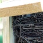 Stick nest