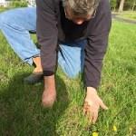 Oak Seeding