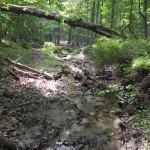 Faulkes Woods Creek