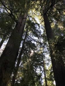 Rainforest trees