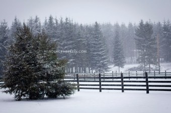 Snow Staycation